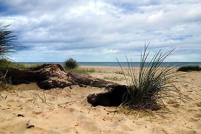 REDUCED Stay @ dog friendly holiday cottage in seal pupping season along beach