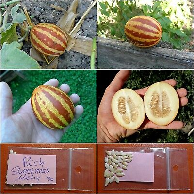 Melon ''Rich Sweetness'' ~30 Top Quality Seeds - EXTRA RARE - Super Sweet!