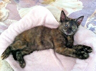 Sponsor Chunky A Blind Cat Vet Care For Rescue Kitten Receive Color Photo
