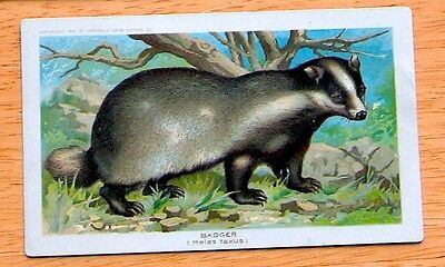1890 K1 Arbuckle Coffee Animals - Cards Sold Individually, Your Choice - G-VG