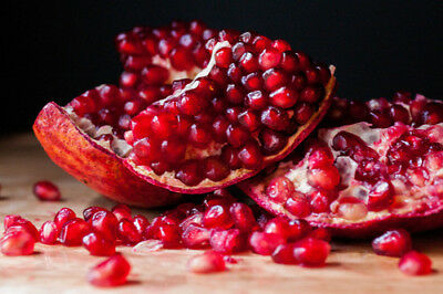 Pomegranate Tree – Delicious Large Red Fruits