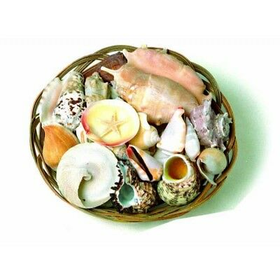 Basket of mixed shells for room decoration or craft project