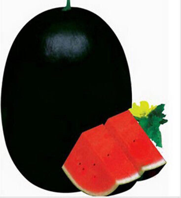 Giant Watermelon Seeds Black Tyrant King Super Sweet Watermelon Seed_50 Pcs