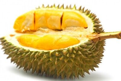Durian Seeds The King Of Fruit High Nutrition Delicious Fruit Better Libido 30Pc