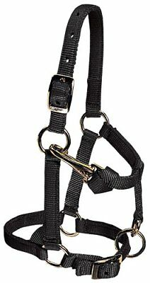 Weaver Leather Nylon Miniature Horse Adjustable Halter,