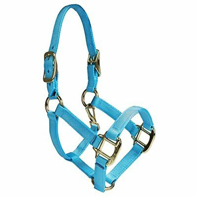 Intrepid International Nylon Miniature Horse Halter, Li