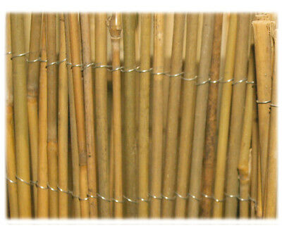 Arelle Mister bamboo