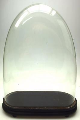 Fine Antique Oval French Glass Dome Victorian Dome For Mantel Clock Glass Dome