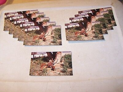 10 Unused RACCOON FAMILY Postcards PARKE COUNTY INDIANA