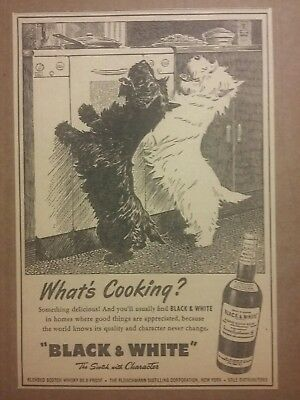 1950 Black & White Blended Scotch Whisky Ad Terrier  Whats Cooking