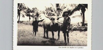 Vietnam - ethnic 'children with bull' postcard (2910)