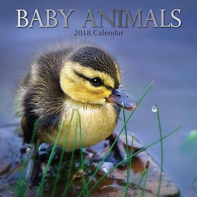 Baby Animals 16 month 2018 Square Wall Calendar