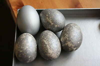Hand Blown Duck Eggs x 5 Sprayed Silver Ready for Decorating