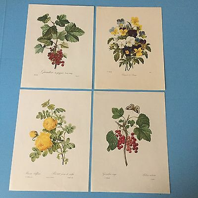 P.J. REDOUTE Vintage Botanical Floral Prints Collectible Group Of Five A6