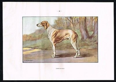1950 Antique Print -  Billy Large Scenthound Hunting Dog France - Castellan