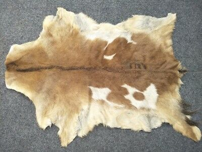 Goathide Western taxidermy Rug Cow Natural Pattern Fur Goat Skin MB-3327