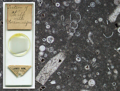 Chalk with Foraminifera Thin-Section Microscope Slide, by James How