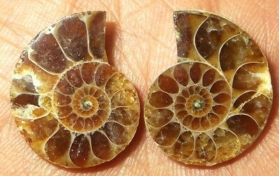 22Cts. 100% Natural Ammonite Fossil Nice Matched Split Pair Gemstone 1450