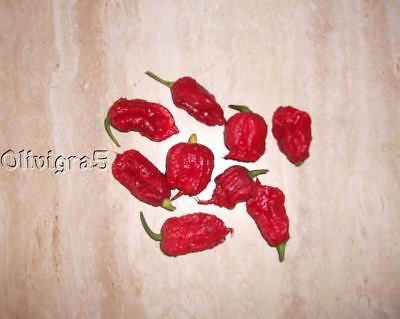 25+ Organic World's Hottest HP22B Carolina Reaper Hot Pepper Seeds-O 80
