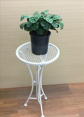 French Country Vintage Inspired Wrought Iron WHITE ROUND Side Table Plant Hol...