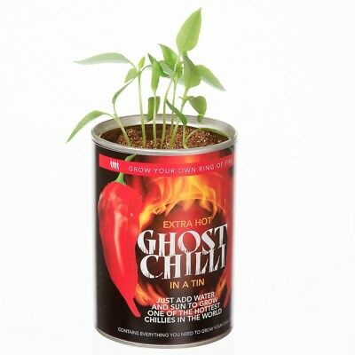 Grow Your Own Hot Ghost Chilli Chillies Peppers Secret Santa Fun Stocking Filler