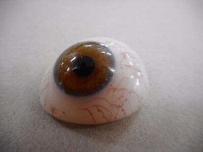 Vintage / Antique Prosthetic Glass Eye ... E