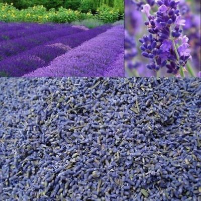 Dried lavender Extra Fragrant French Lavender.