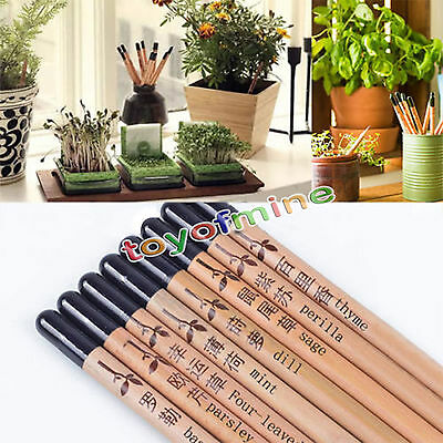 8 Pieces/Set Sprouting Bud Sprout Pencil Plant - Herb Basil Tomato Green Pepper