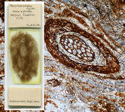 Fossil Plants Microscope Slide