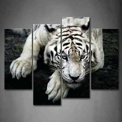 "Black And White White Tiger Lie On Rock Wall Art Painting Pictures Print 12""x26"""
