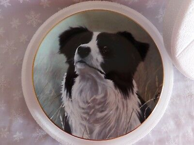 "Border Collie Collectible Plate Danbury Mint "" Yours Faithfully"" Limited Edition"