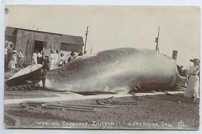 C1915 Rp Pu Scarce Postcard Slipway Whaling Industry Durban South Africa W26