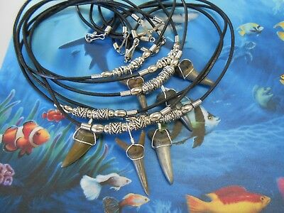 Lot of 6 Sterling Silver Wrapped Megaladon Era Fossil Shark Tooth Necklaces