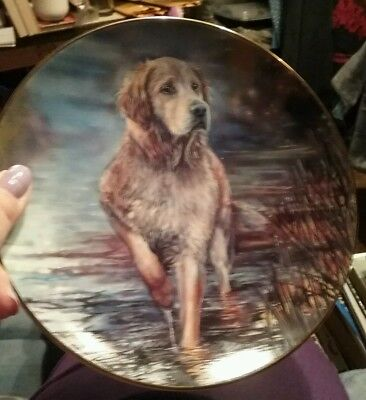 Golden Companions On The Alert Plate Danbury Mint Mandie Haywood Retriever