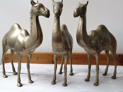 Stunning Vintage Brass Camel Trio Set 3 - Over 12 inches tall