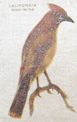 Vintage tobacco cigarette silk - California waxwing bird - use in crazy quilt