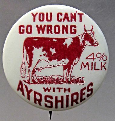 YOU CAN'T GO WRONG WITH AYRSHIRES 4% MILK dairy cow celluloid pinback button  *