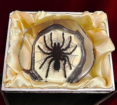 REAL Tarantula in Decorative Acrylic Block-Taxidermy Paperweight-Gothic Decor