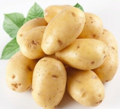 Gold Potatoes Flavorful Yellow Seeds Fleshed Potato Vegetable Seeds Nutritious