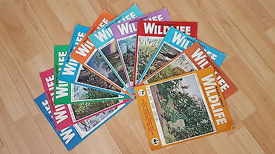 Vintage Magazines - Wildlife and the Countryside 1960's - VGC - Set of 10 Issues
