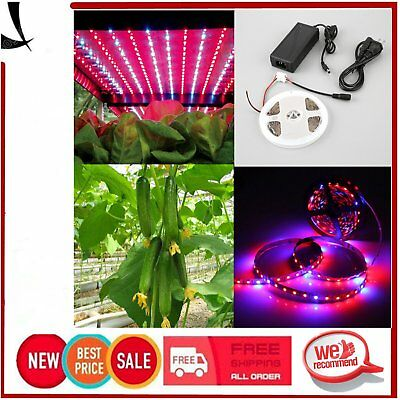 5M Full Spectrum Red Blue LED Strip Light Plant Grow Lights 5050 SMD Waterproof~