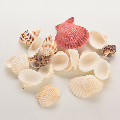 Sea Shells Shell Craft Aquarium Beach SeaShells Mixed Randomly Gift SZGX