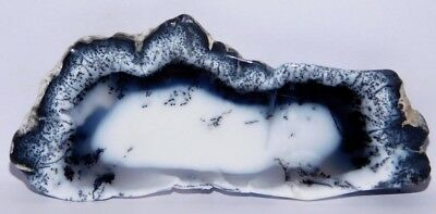 250cts. Natural Royal Dendrite Opal Agate Plate Rough Loose Gemstone 4214