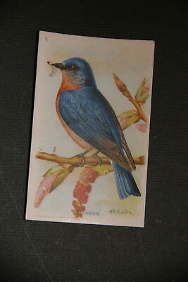 Vintage Church & Dwight trading card 7th series -#1, BLUEBIRD