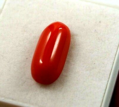 Awesome Looking 9.60 CT Natural Shape Oval Red Coral Gemstone