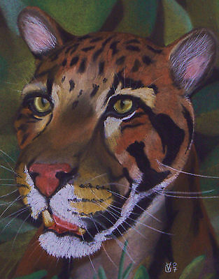 Vg093 (Animals, Realism, Original) Chalk Pastel Drawing Of A Clouded Leopard