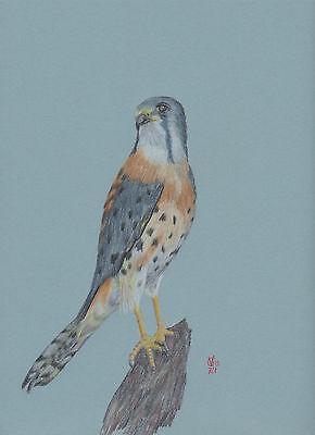 Vg721 Original Coloured Graphite Drawing Of An American Kestrel