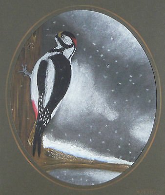 Vg092 Original Pastel Drawing Of A Greater Spotted Woodpecker