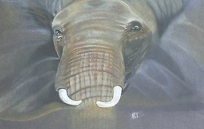 Vg050 Original Chalk Pastel Drawing Of An African Elephant Head
