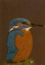 Vg213 Original Pastel Drawing Of A Kingfisher